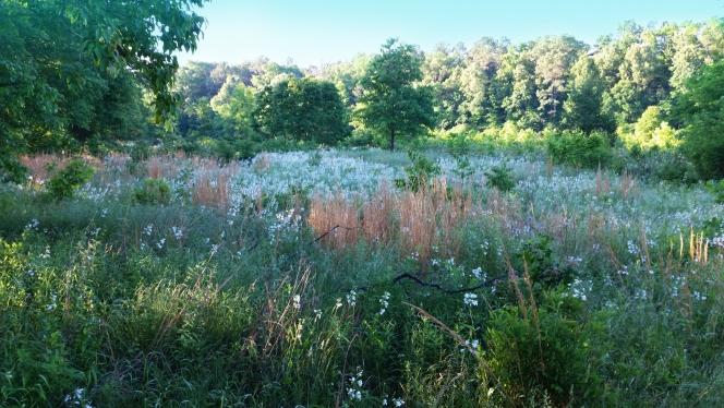 Thomas Berry: Louka za potokem